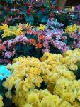 Flores para los muertos primaverales