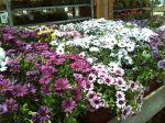 Flores para los muertos más soñadores