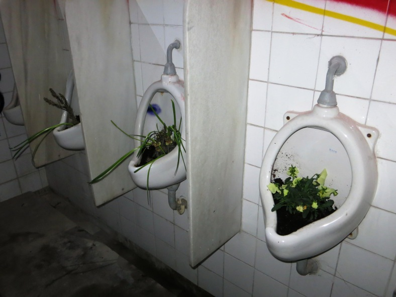 Paseo de urinarios en flor