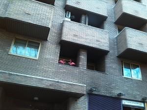 Flamencos urbanos