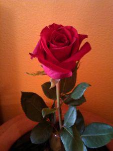 Mensaje con flor