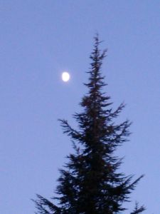 Romance entre la luna y el ciprés