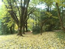 Jardin romántico