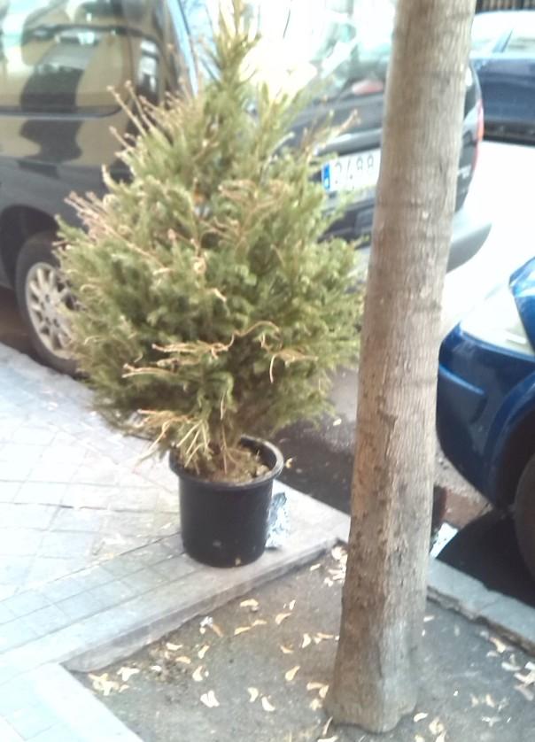 Árbol homeless