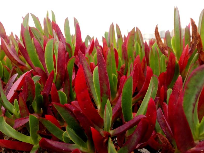 Plantas de colores mirando al mar