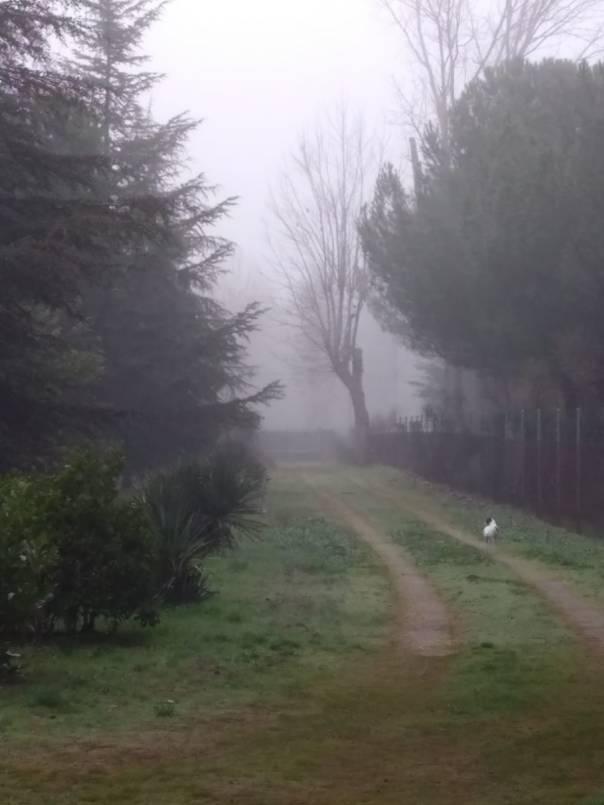 Camino y Niebla