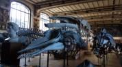 Museo Paleontologia